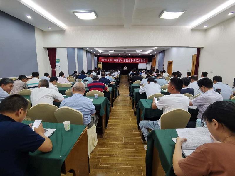 省yabo88app2019管理站召开2019-2020年度省小麦新品种区试总结会